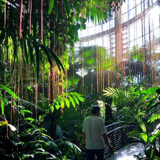 Atlanta Botanical Garden in Atlanta Georgia